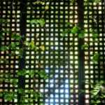 jardim vertical-5